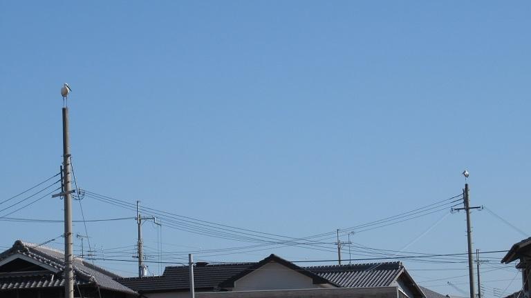 aIMG_5799.jpg