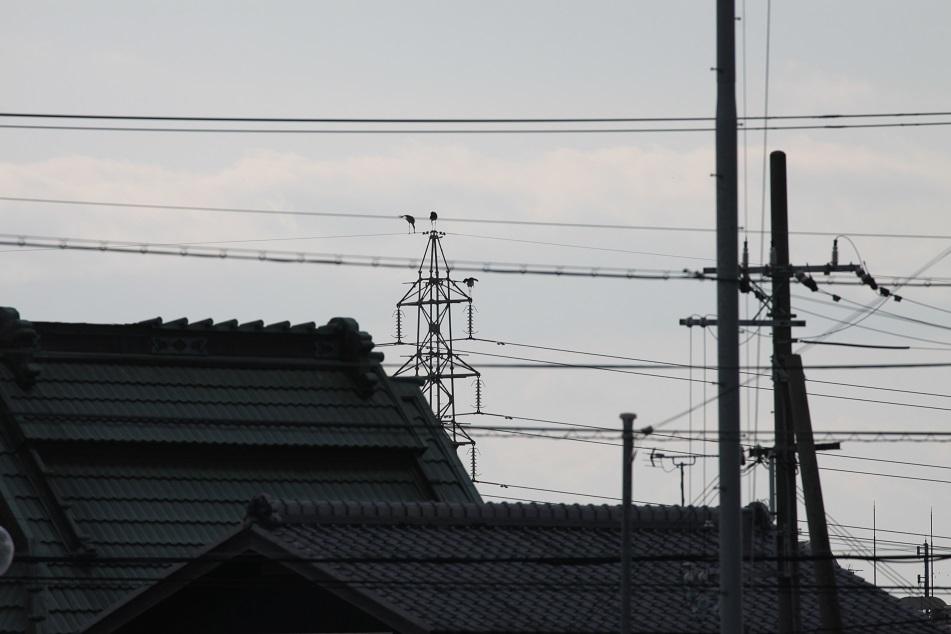 eIMG_2608.jpg