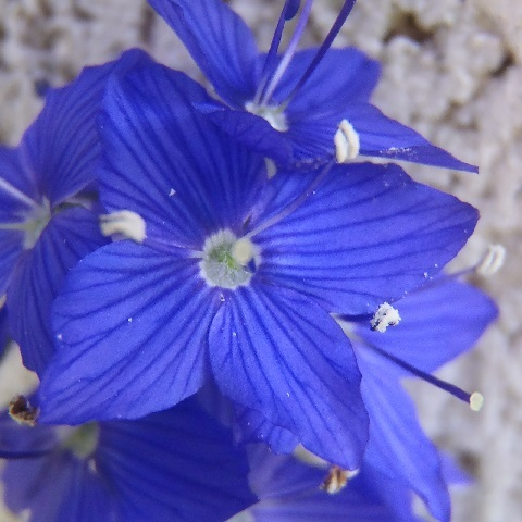 Veronica_Crater_Lake_Blue1-2020.jpg