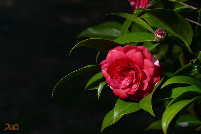 20210331桜_生品神社11