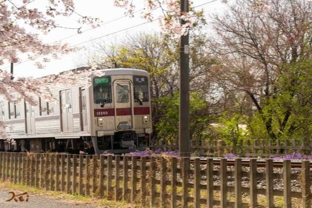 20210331桜_生品神社13