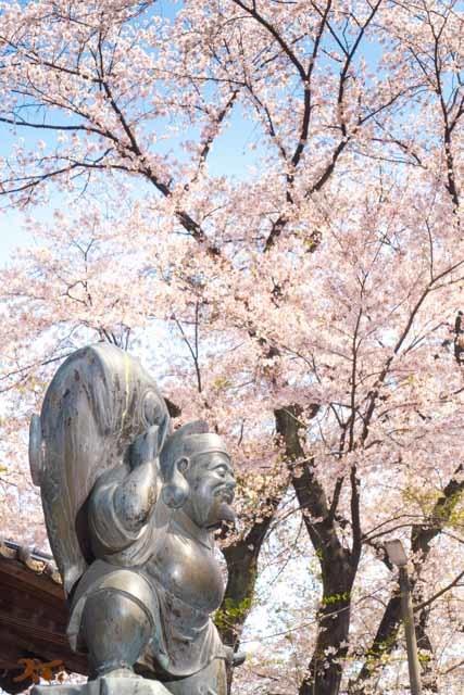 20210331桜_生品神社06