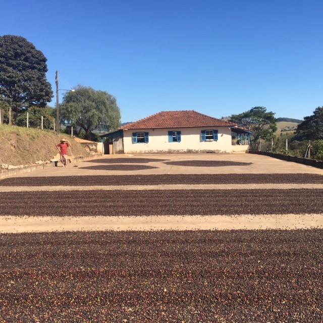 サンタアリーナ農園1