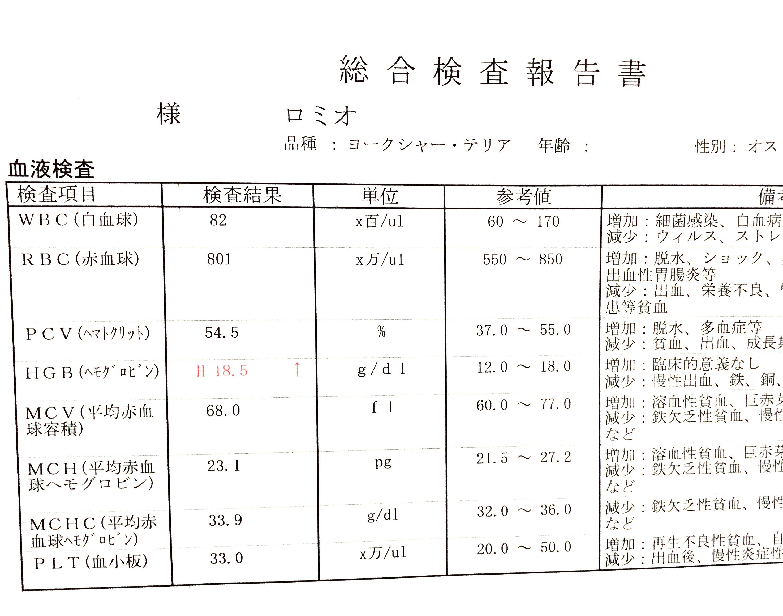 1909ロミオ_初回血液検査01_2