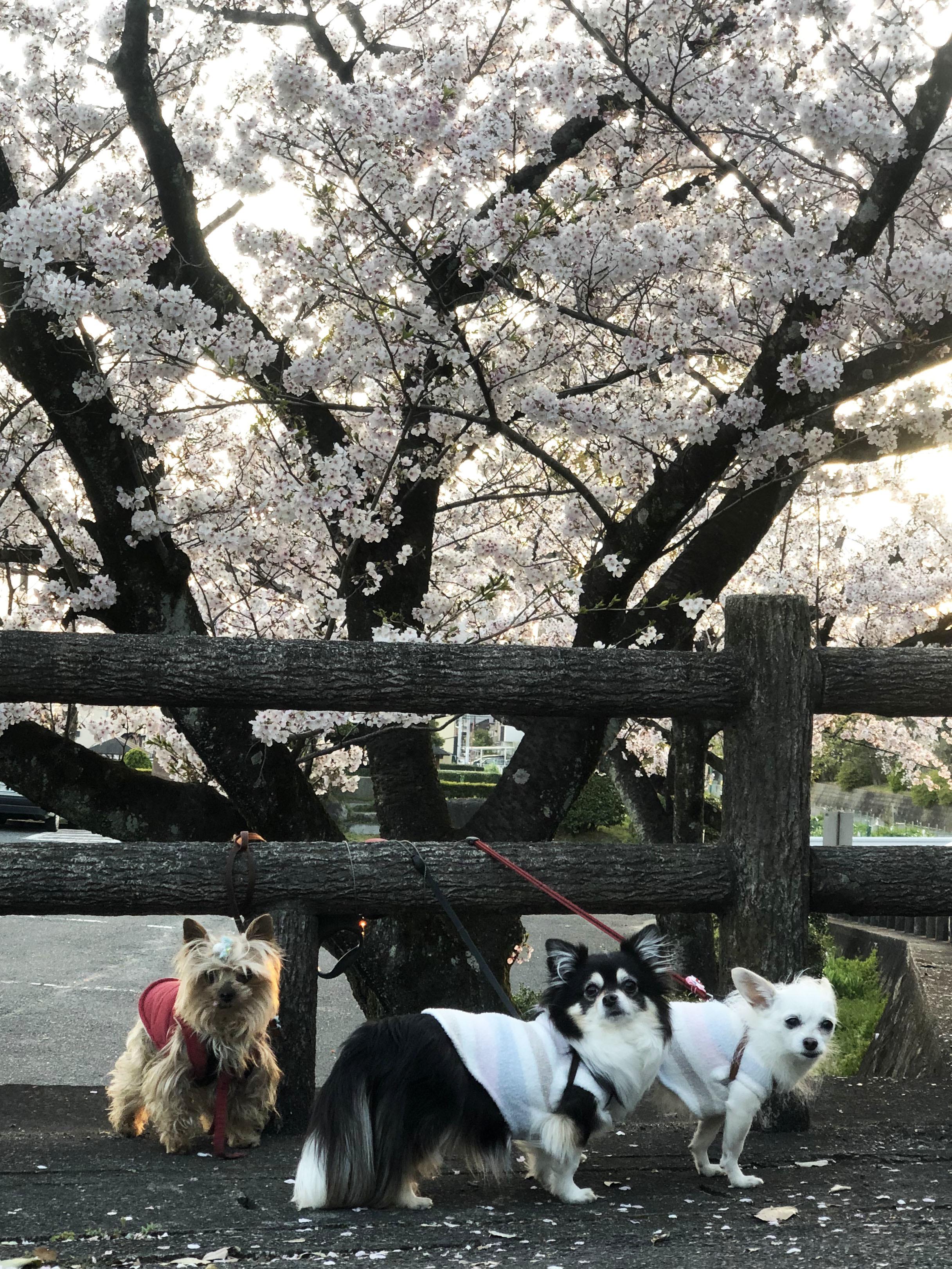 20_04城山にて散歩01
