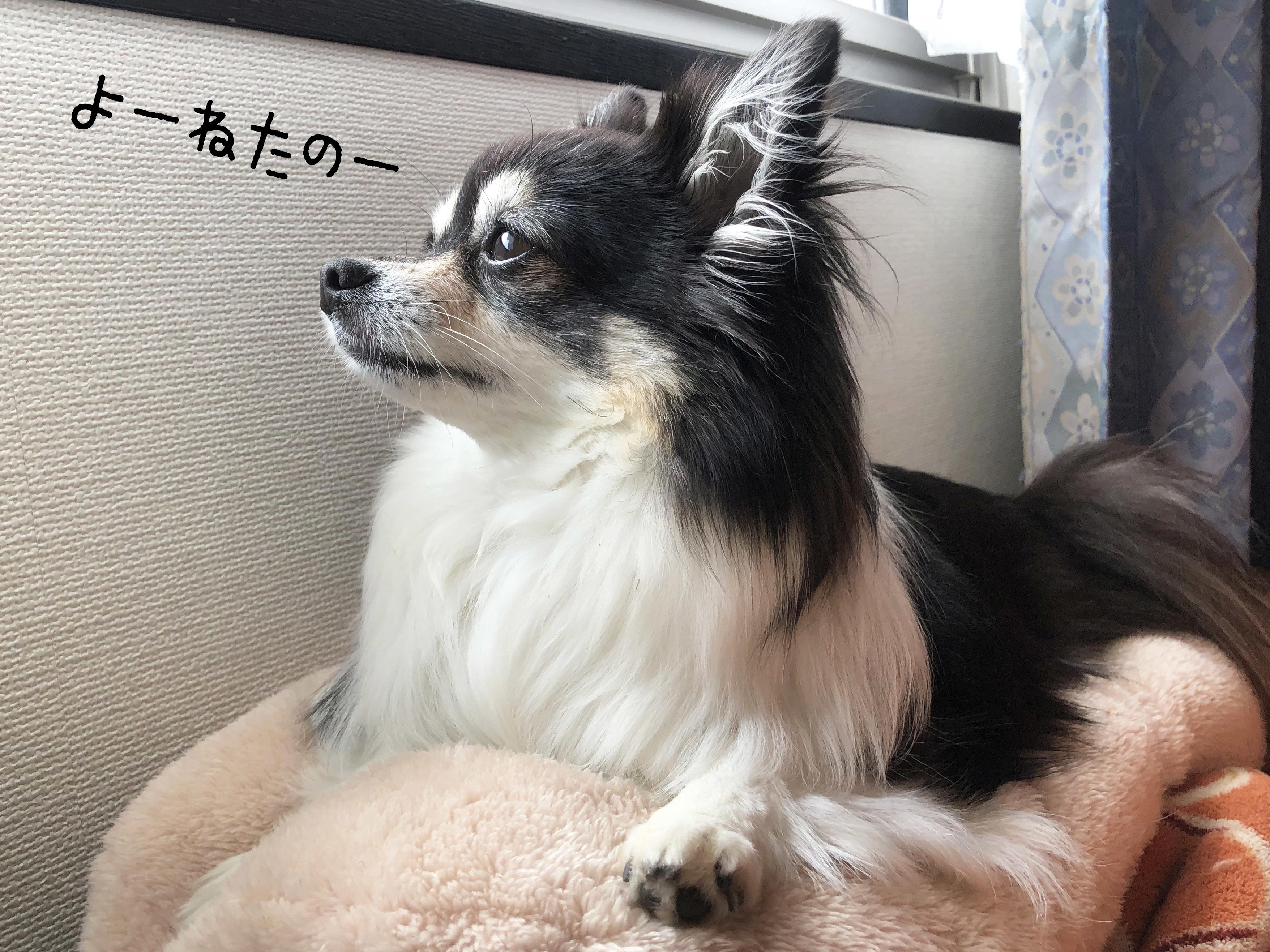 20_05あん08
