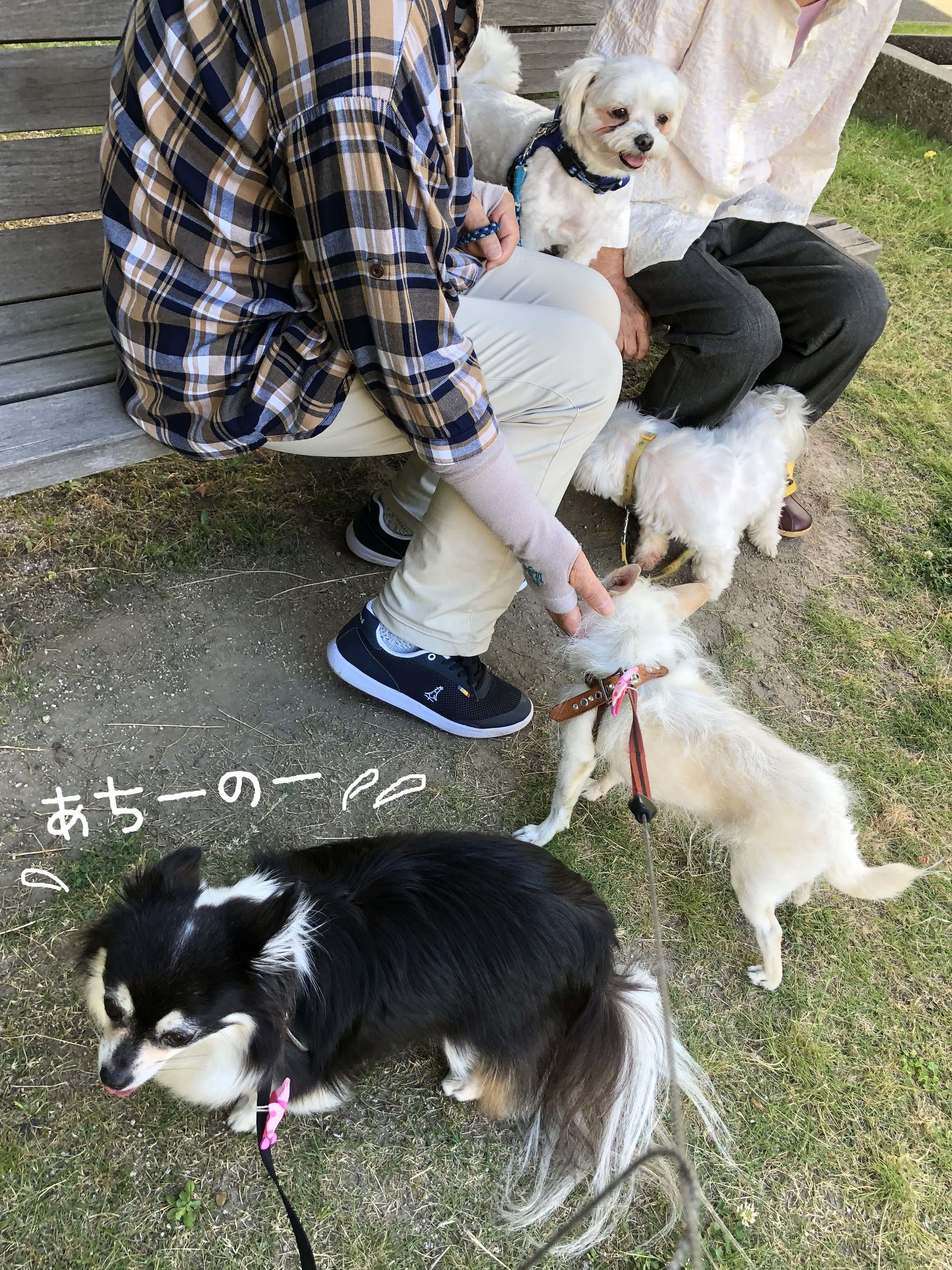 20_06ヘタレ娘03