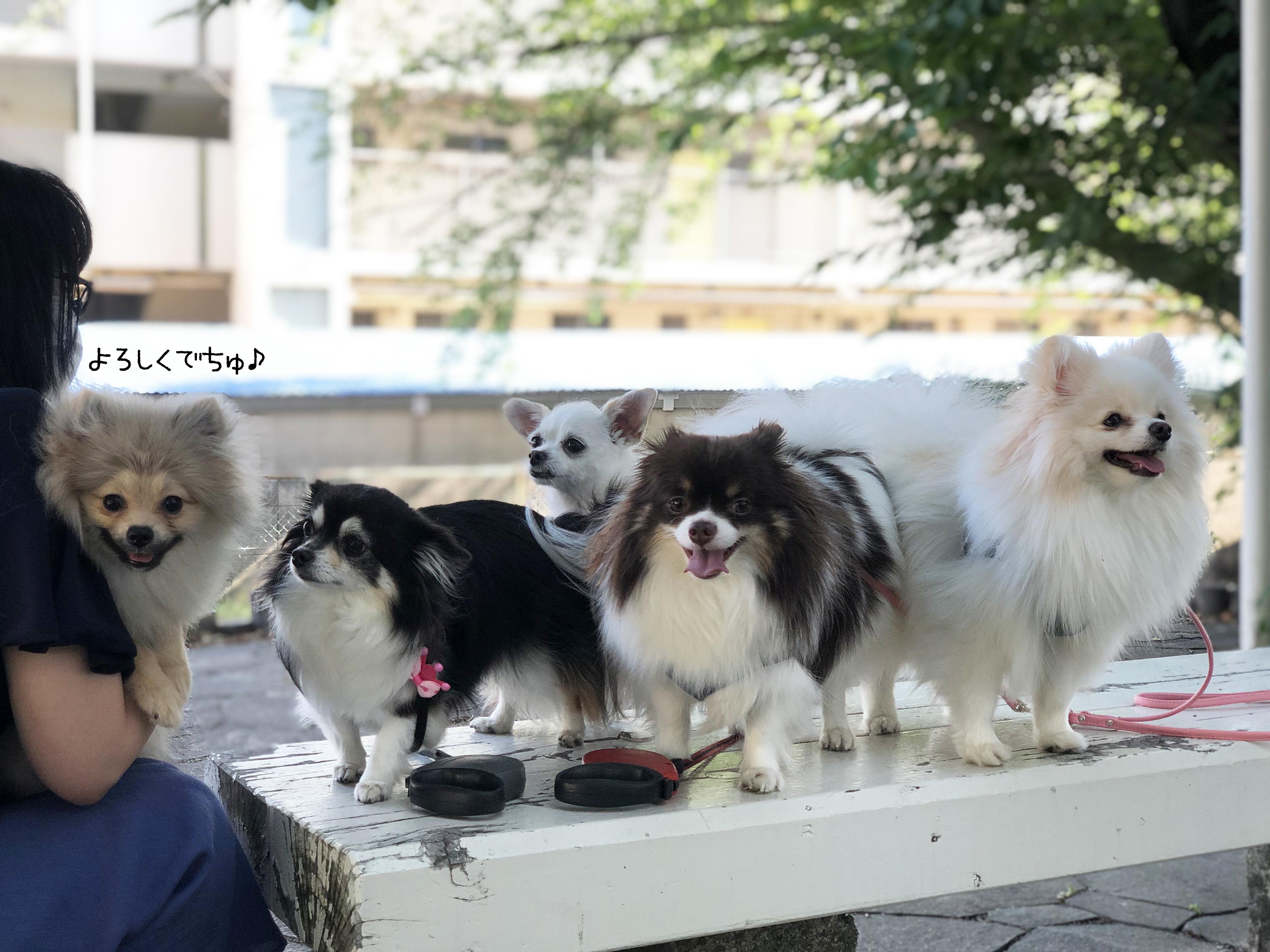 20_06粒犬女子たち02