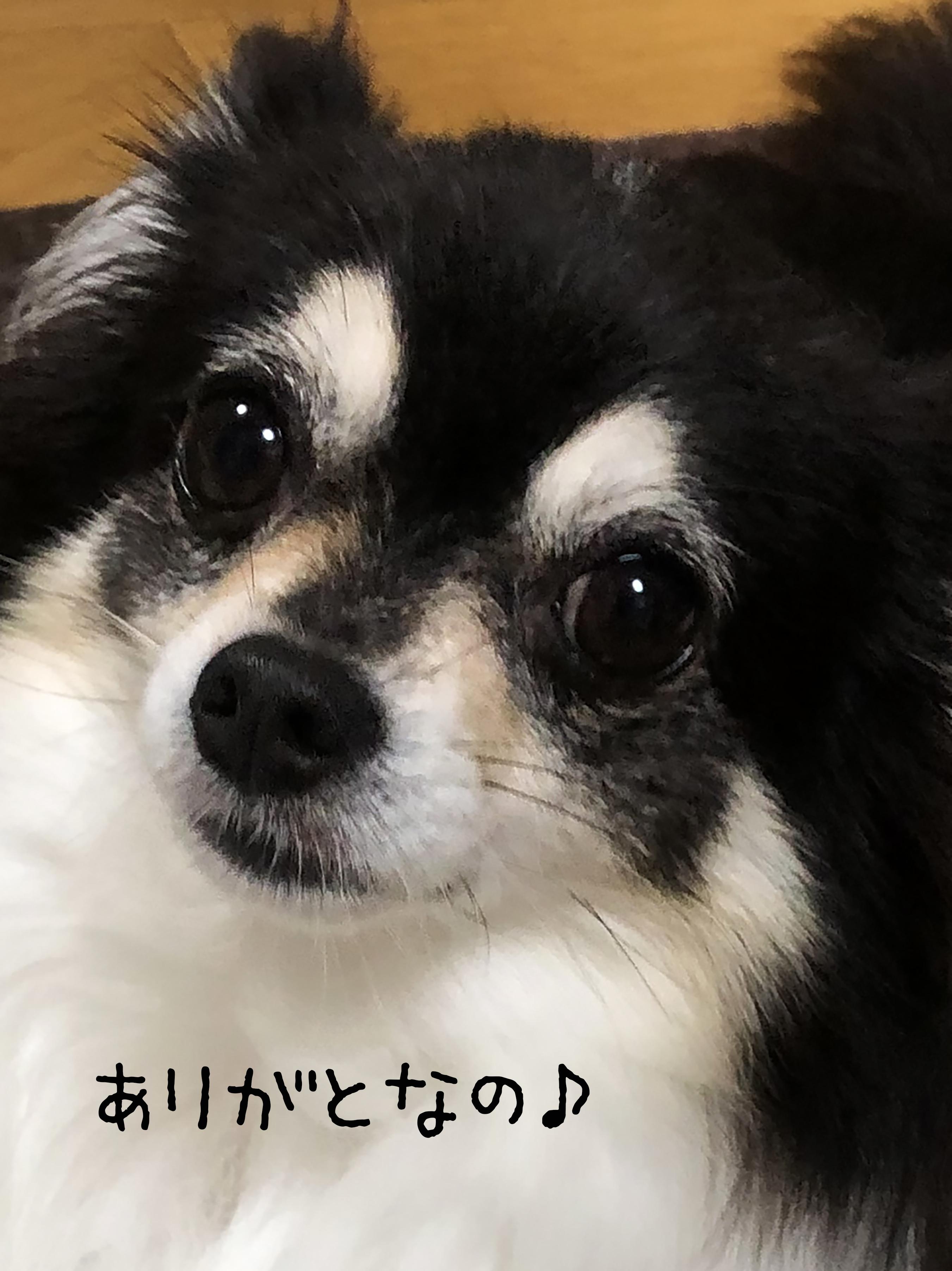 2006あんお礼01