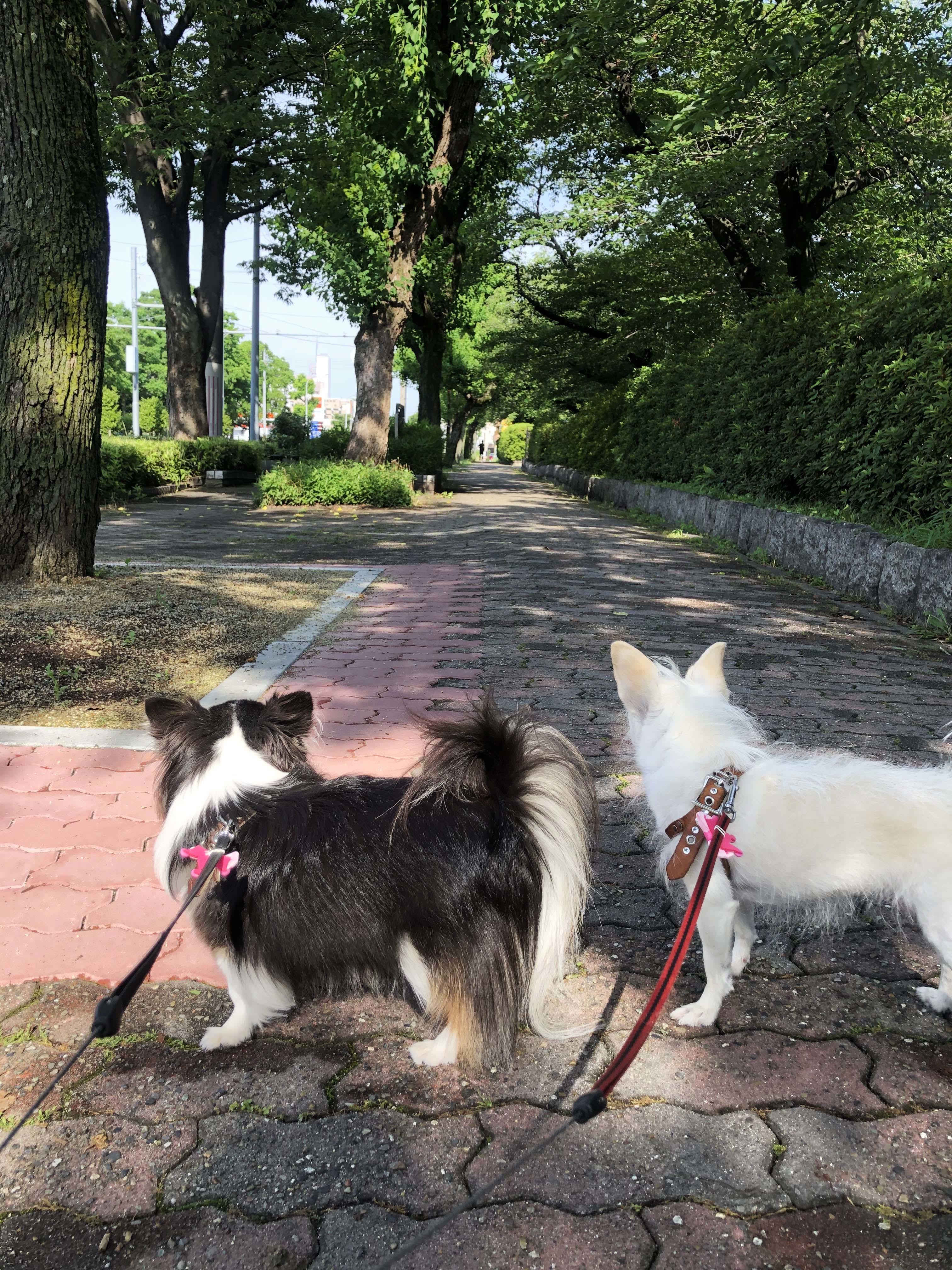 20_07姉妹散歩01