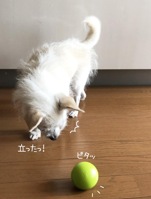 20_07ころんころん_03