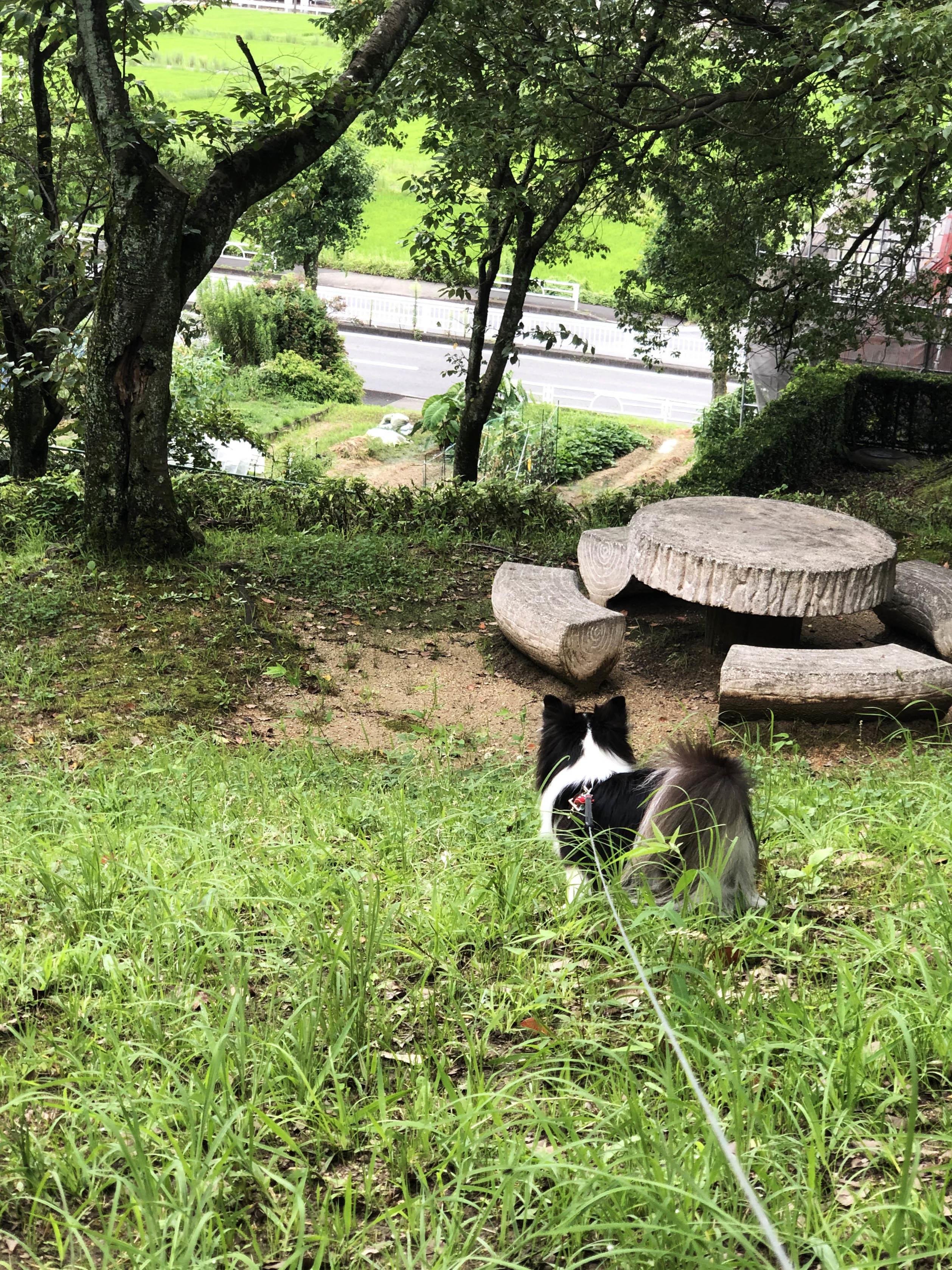 20_0725公園散歩03