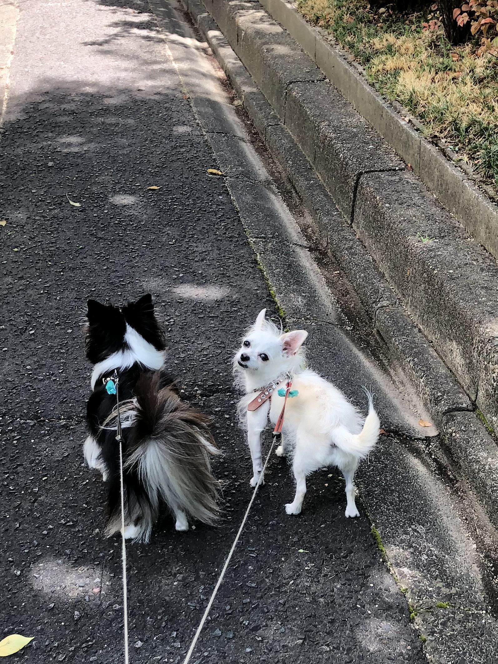 20_09散歩姉妹02