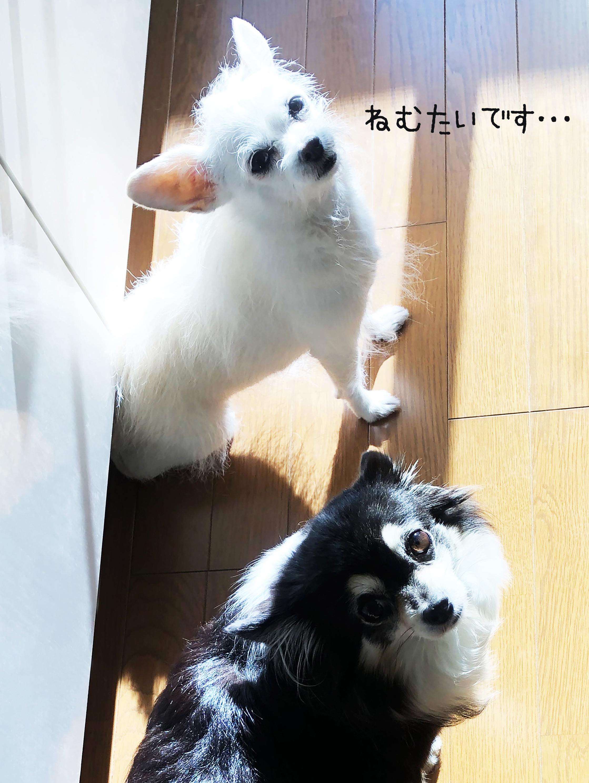 20_10起き抜け姉妹02_2
