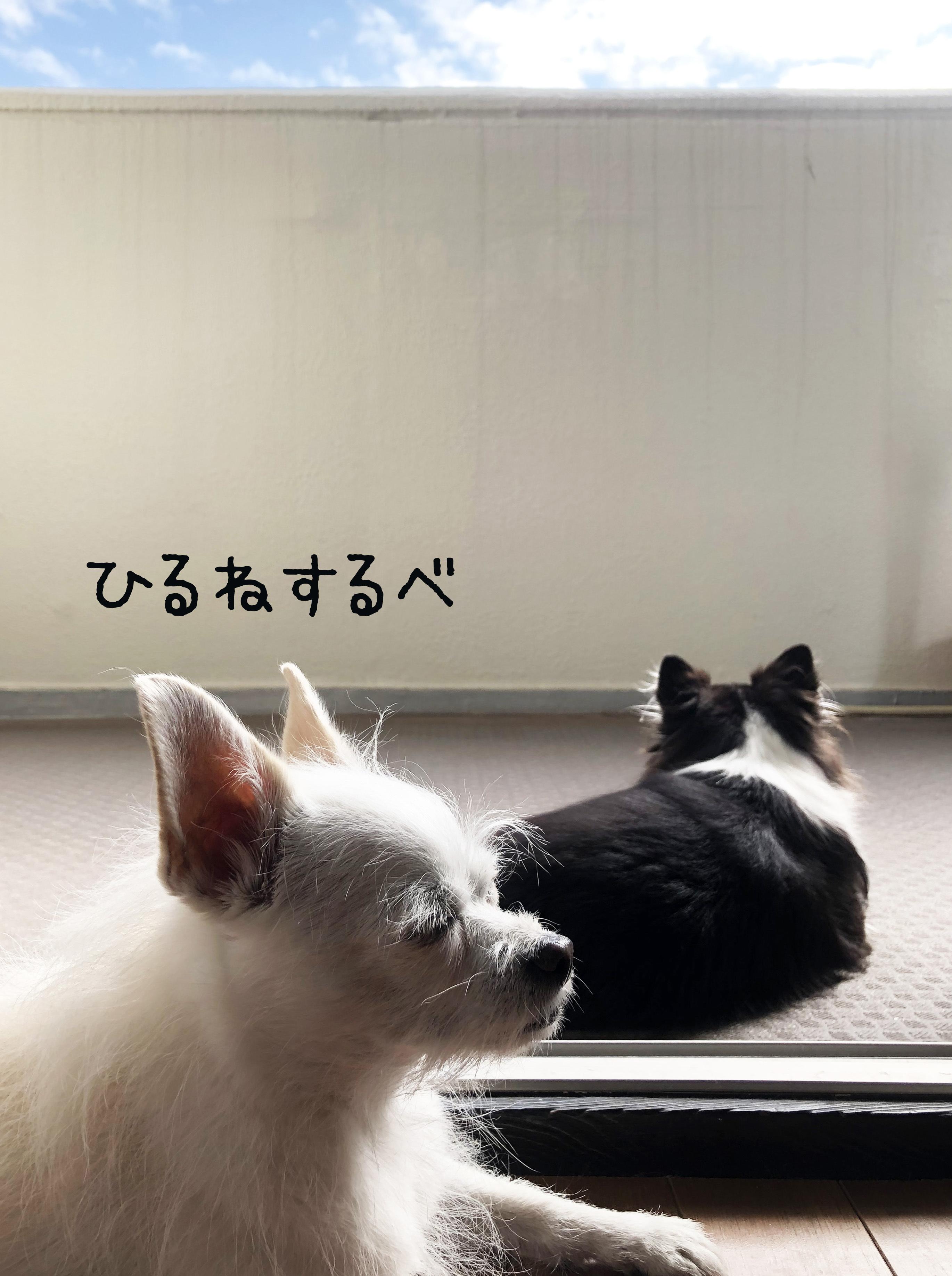 20_11二度寝モード01_2