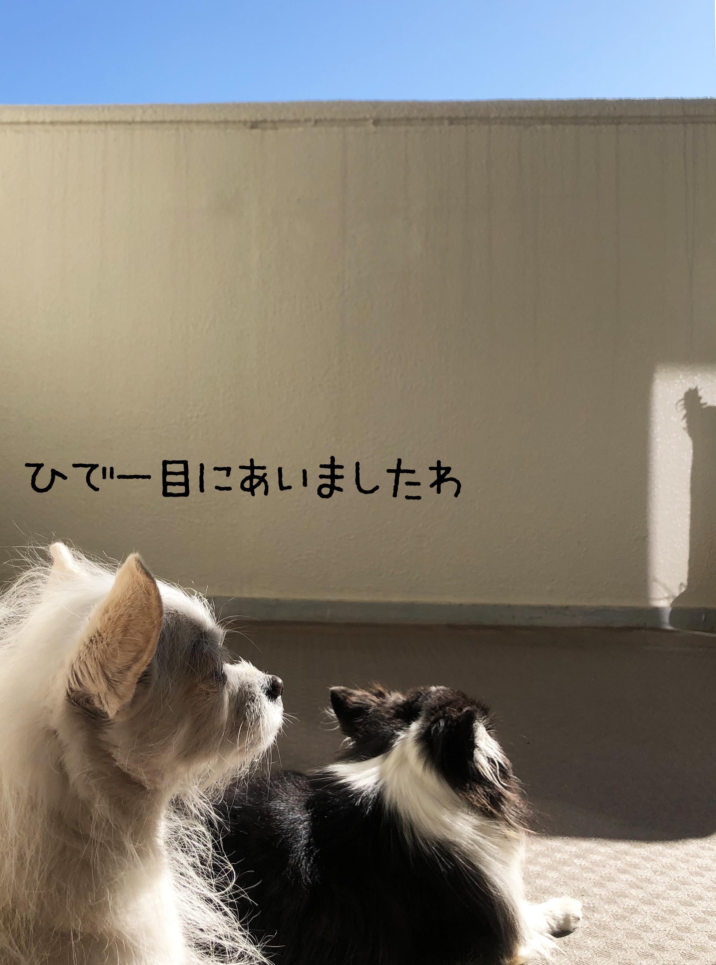 20_11帰宅01