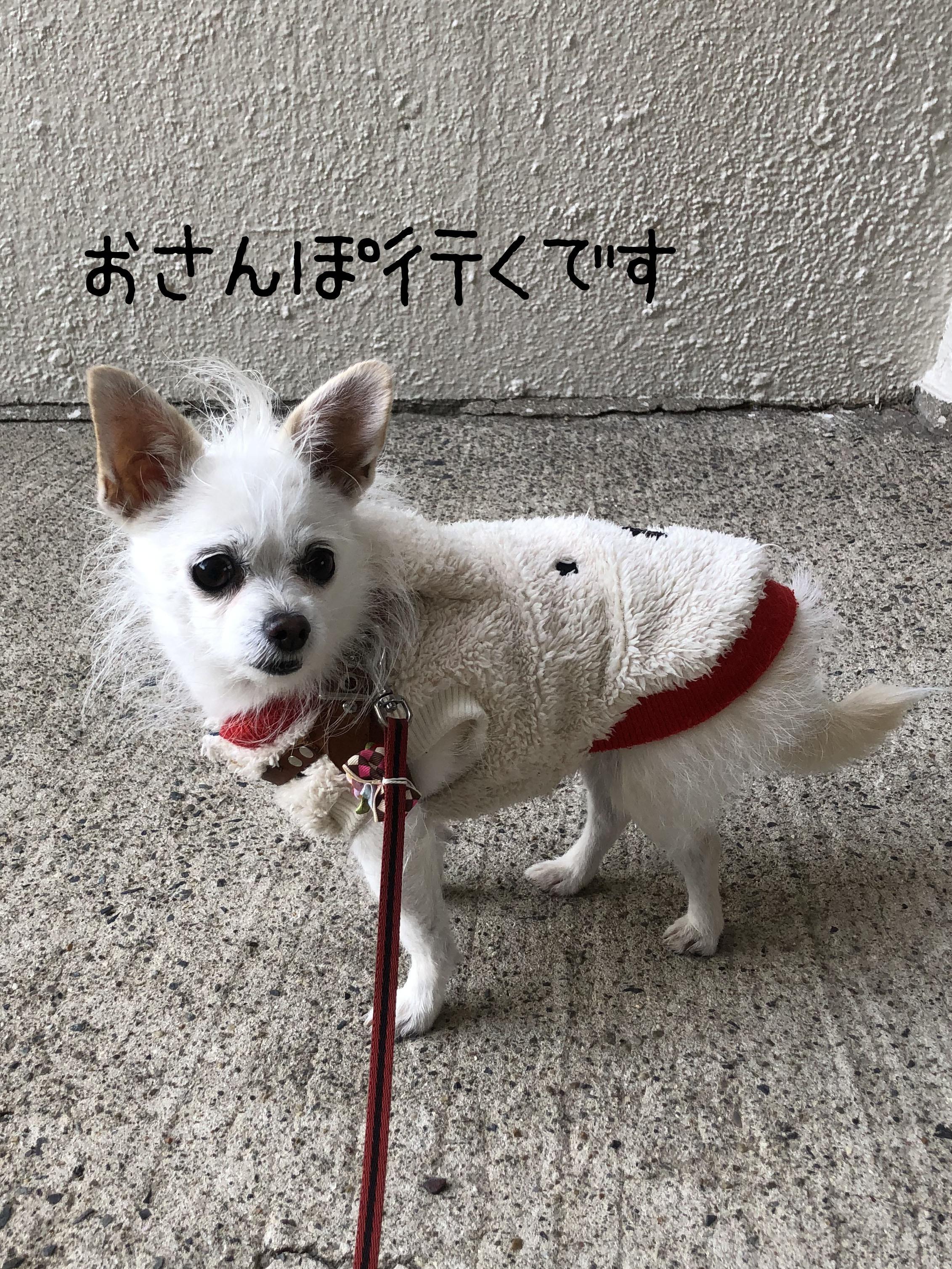 21_01こゆ散歩01_2