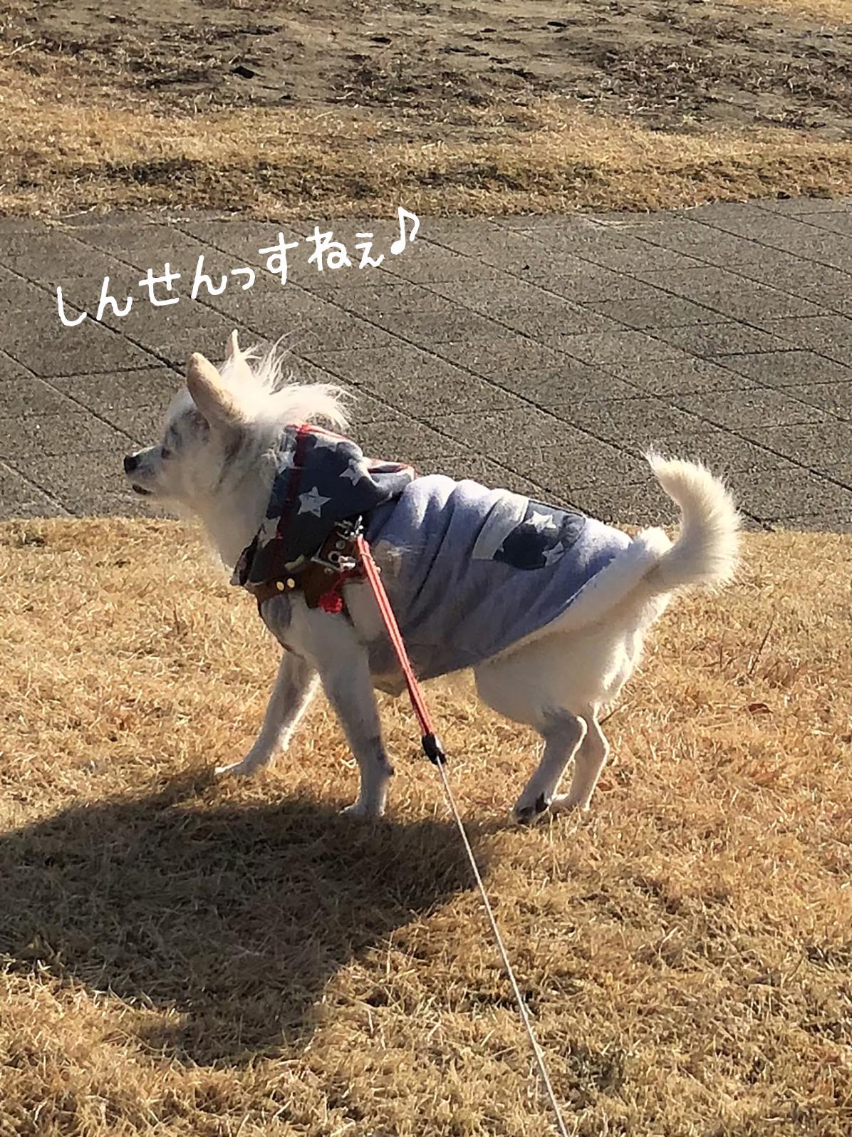 21_01こゆ散歩02