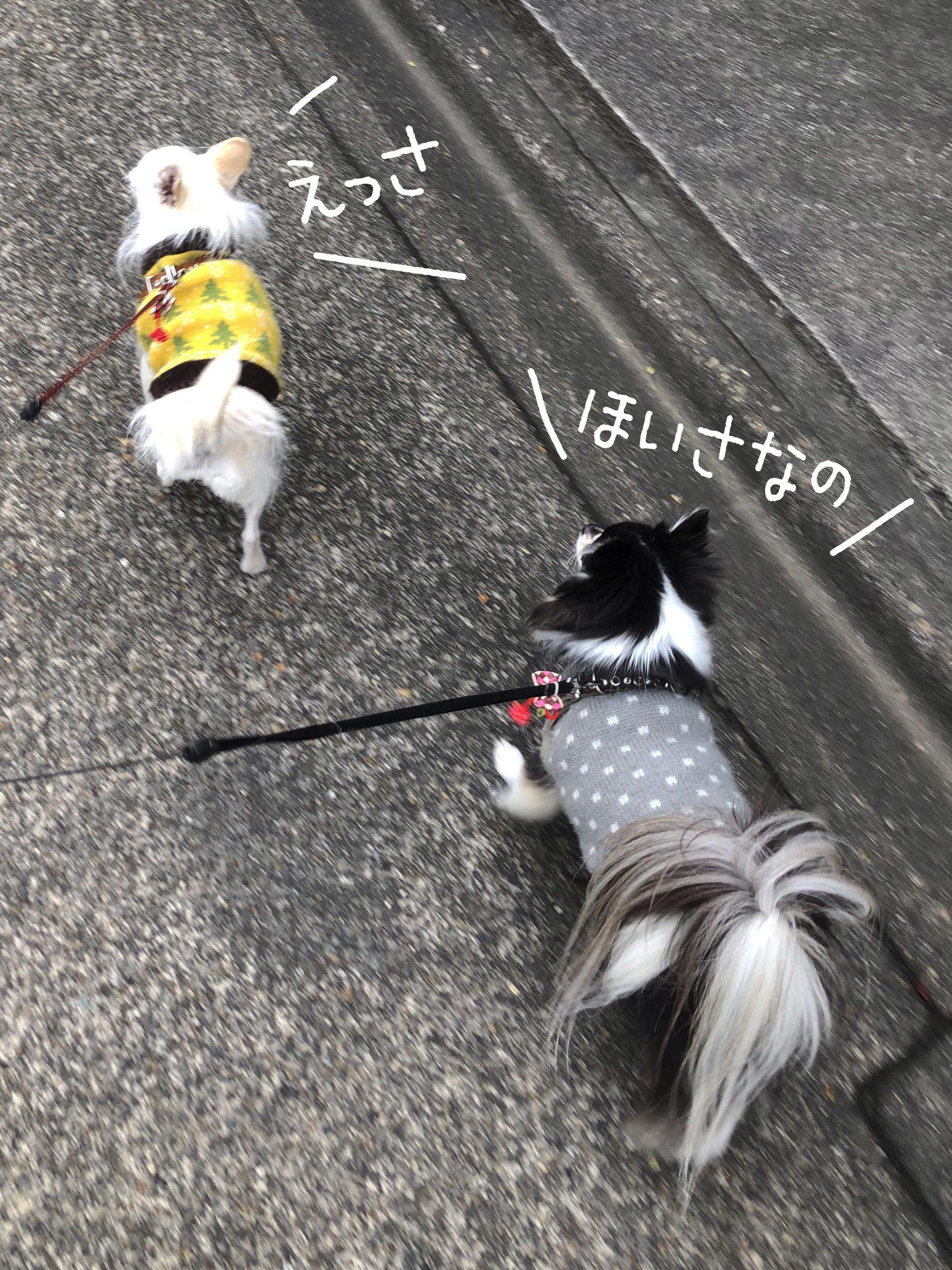 21_01散歩姉妹_01