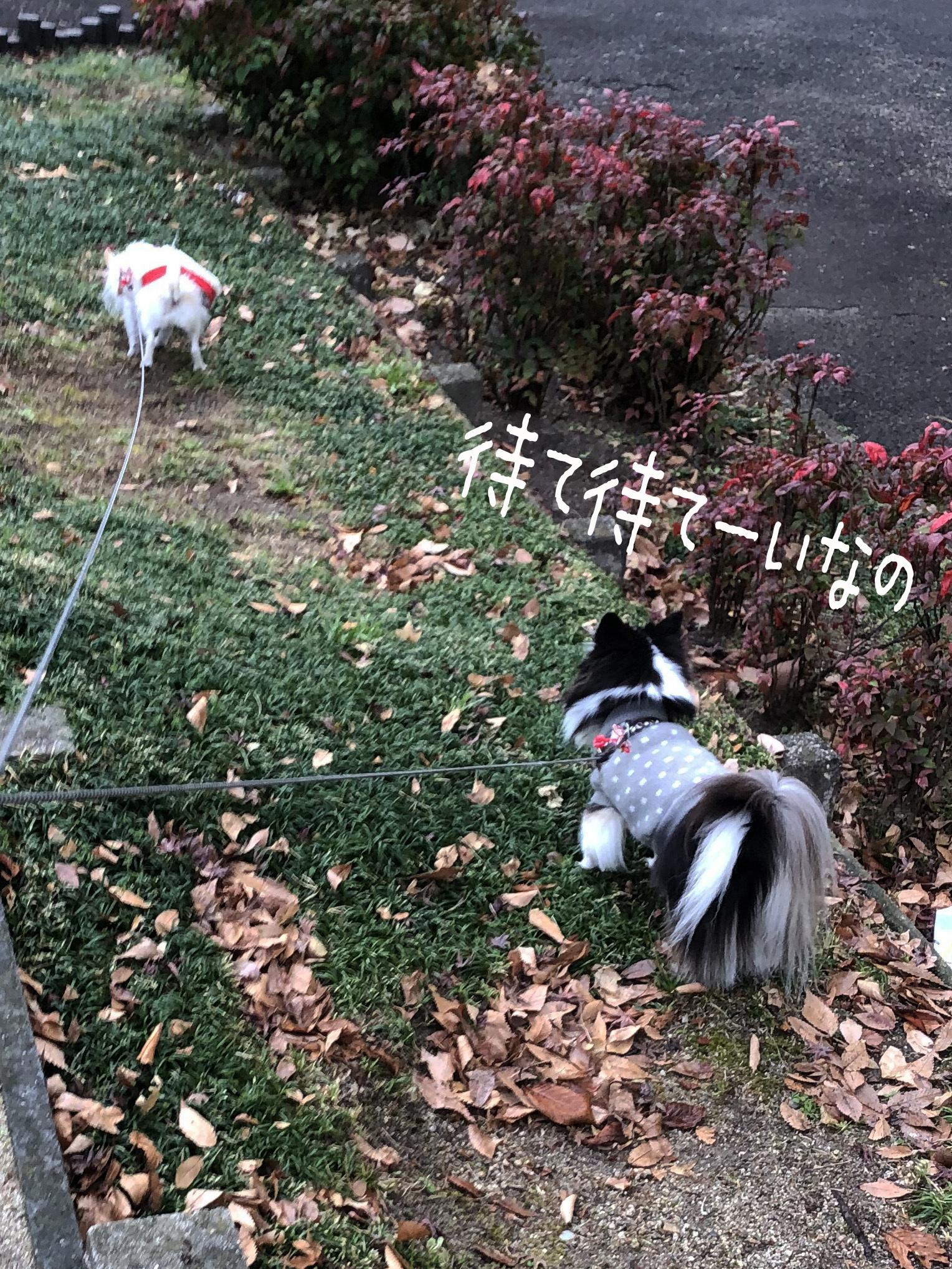 21_01散歩姉妹02