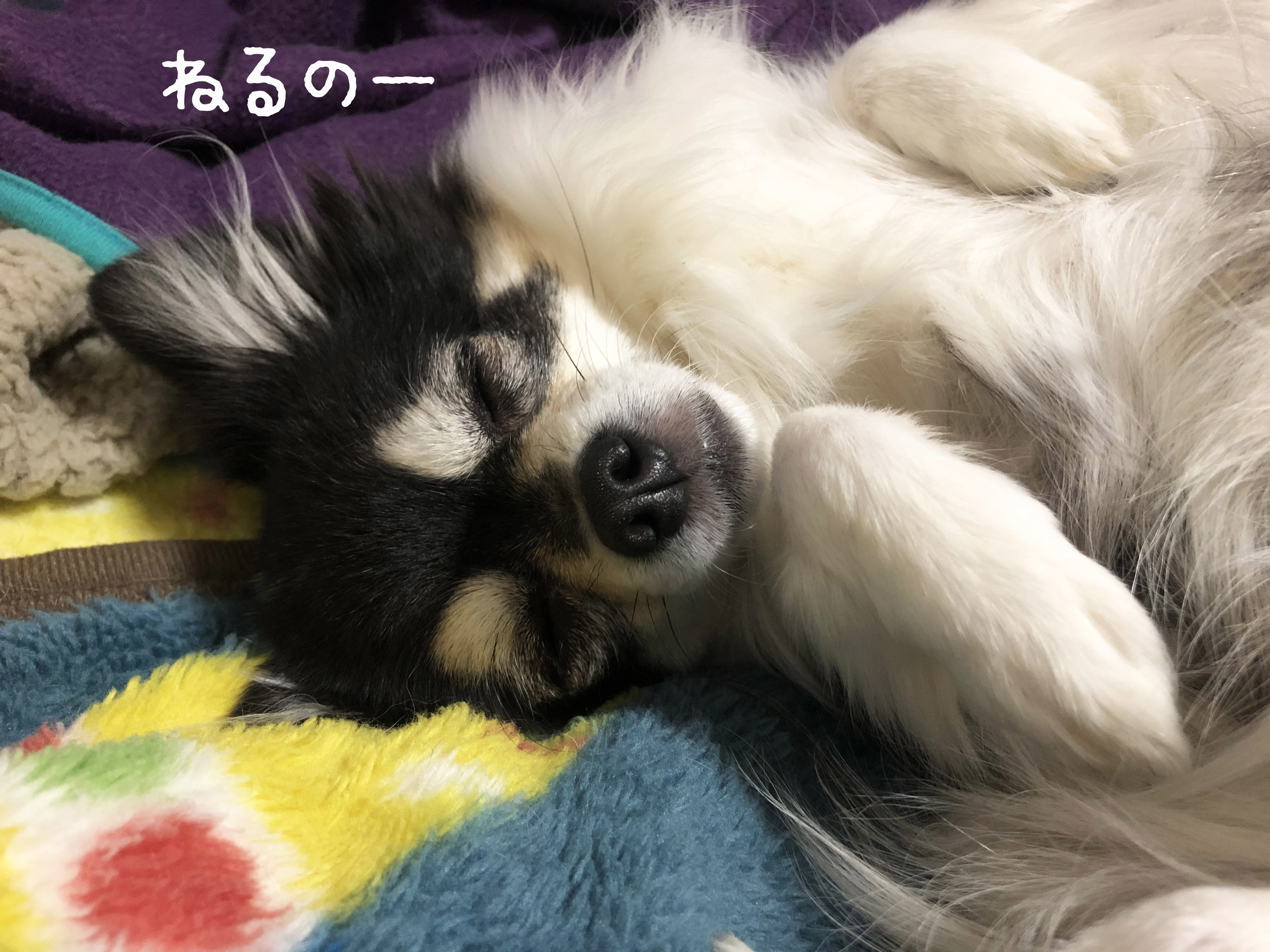 21_01昼寝あん01