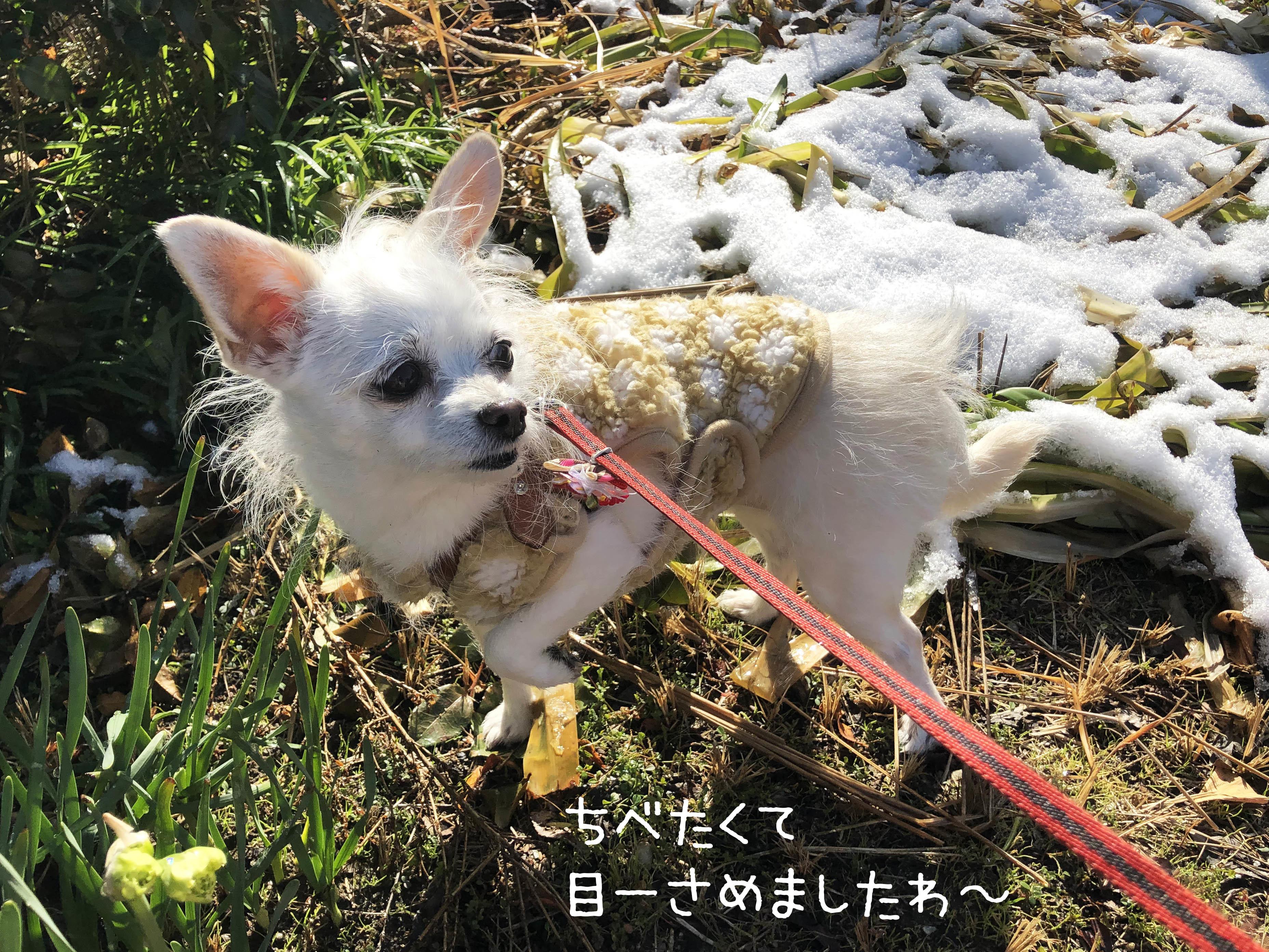 21_01雪残る朝んぽ01_2