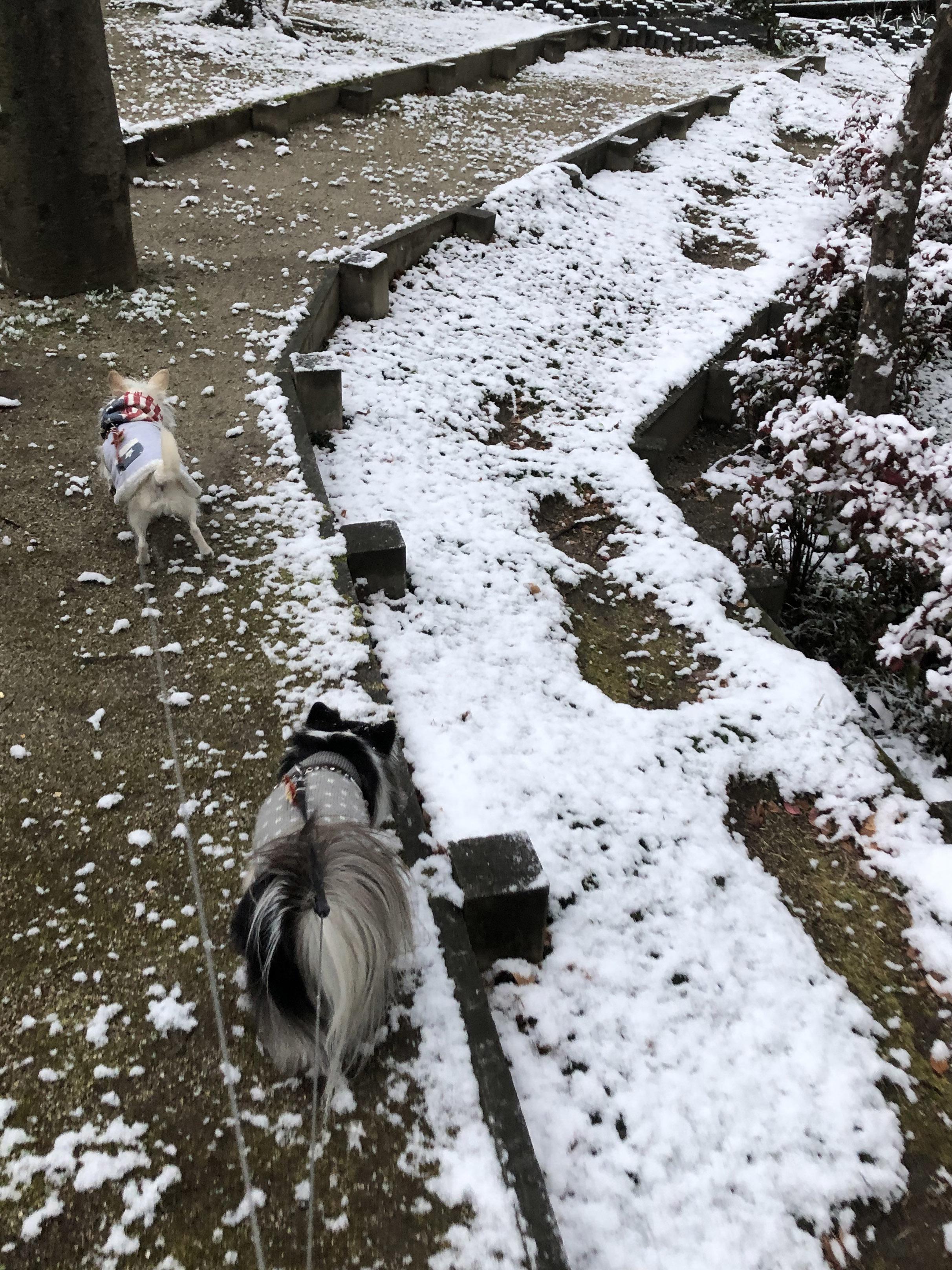 21_02雪を避けるこゆ01