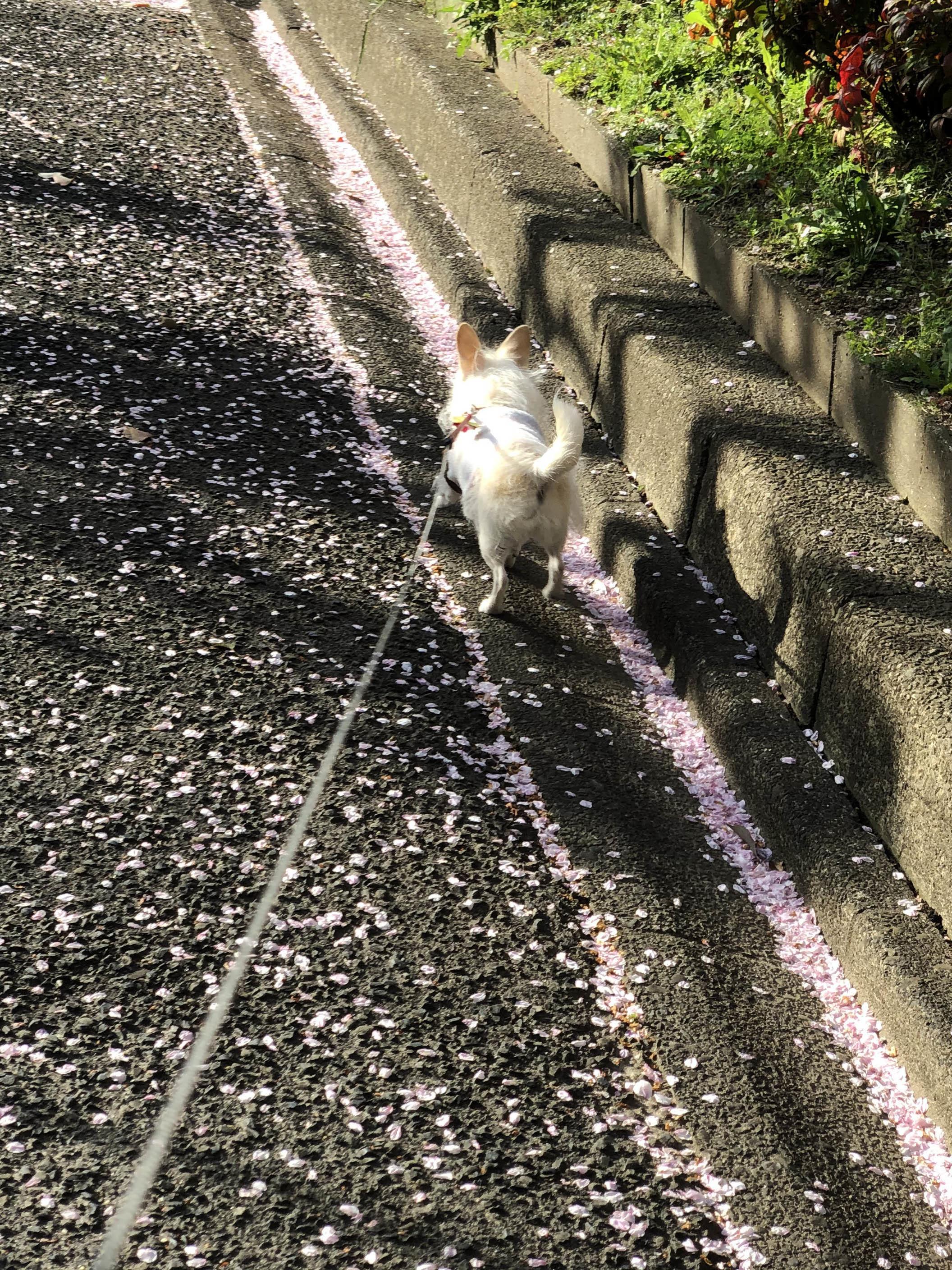 21_03桜の小径01