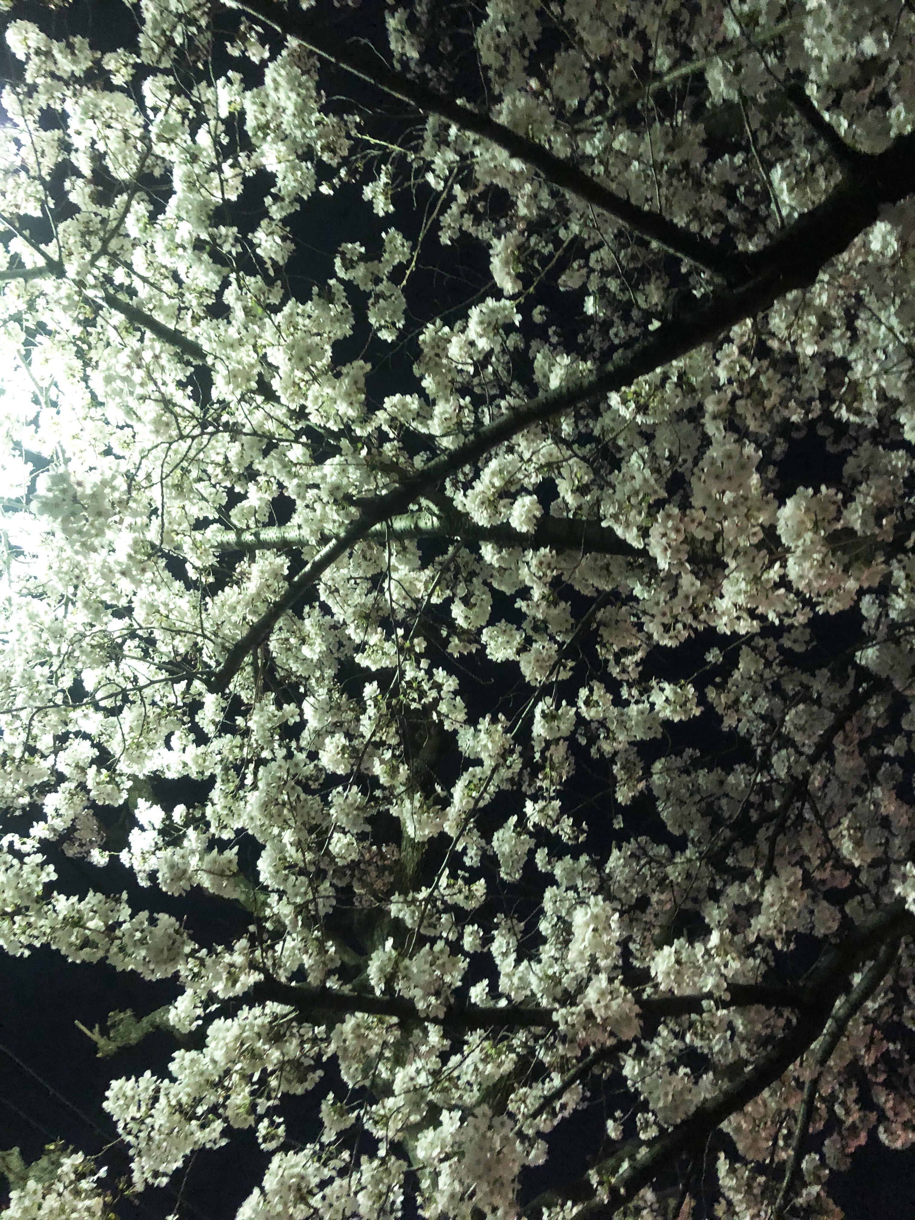 21_03夜散歩にて01