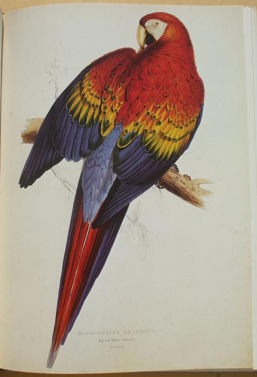 edward lears birds 03