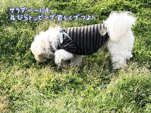 桜散歩16