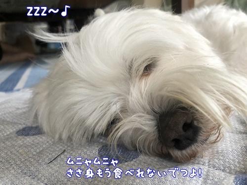 SH昼寝6