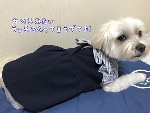 新しい洋服15