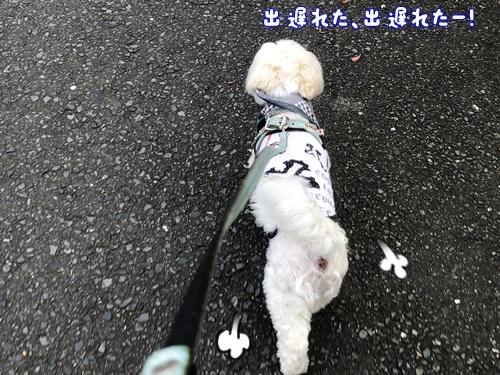 梅雨の合間のお散歩11