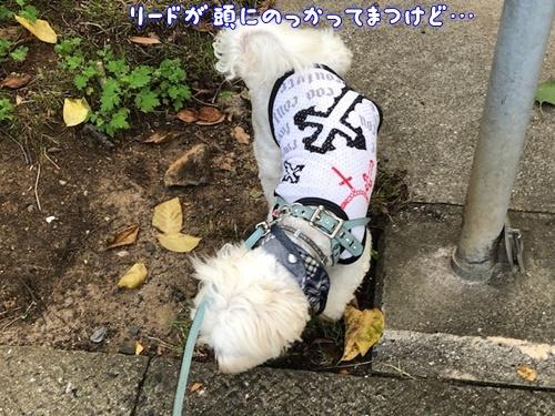 梅雨の合間のお散歩8