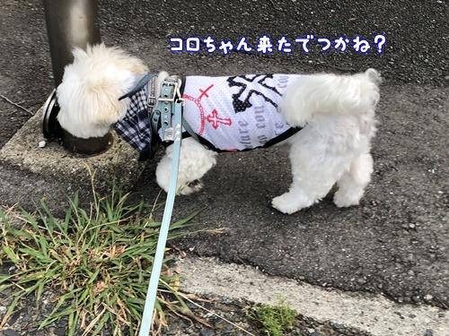 梅雨の合間のお散歩12