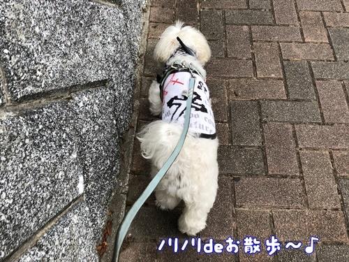 日曜散歩2