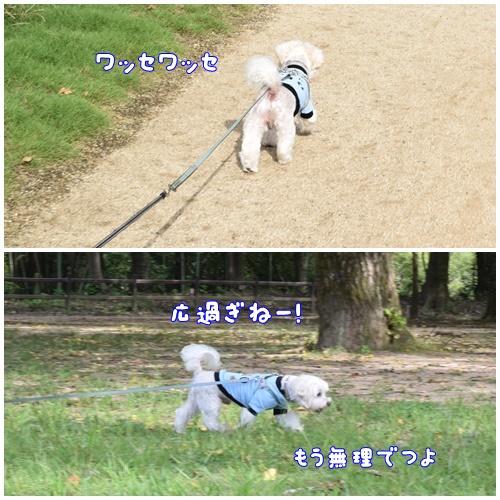 七瀬川公園12