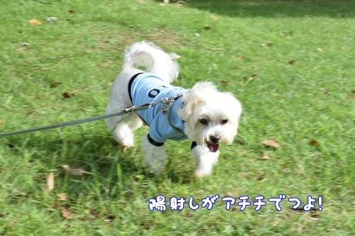 七瀬川公園13