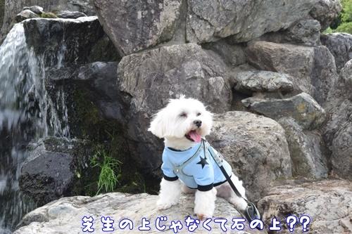 七瀬川公園15