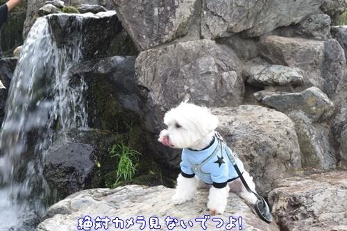 七瀬川公園17
