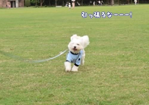 七瀬川公園20