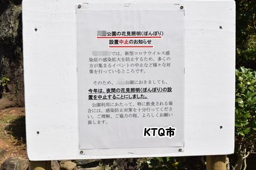 2020sakura5.jpg