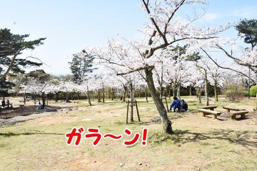 2020sakura6.jpg