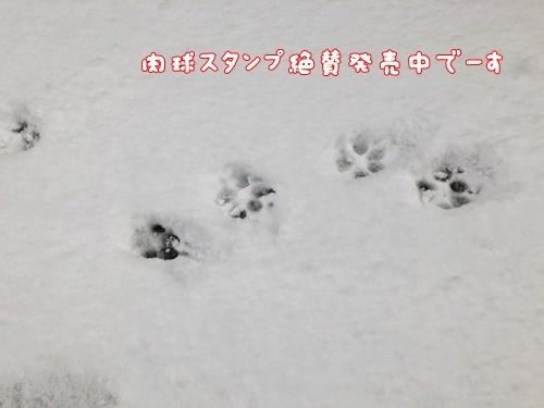2021大雪7
