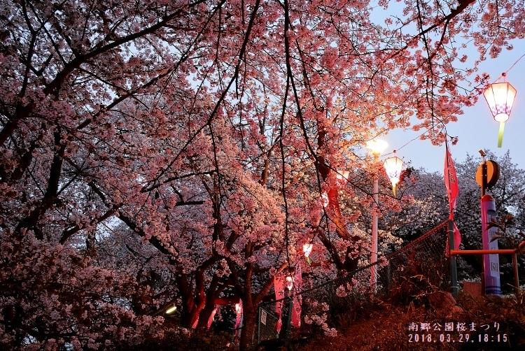 DSC_0753南郷公園桜まつり (750x502)