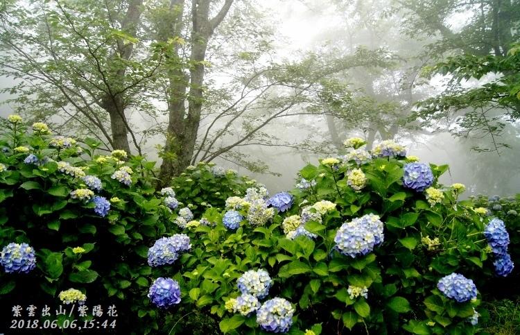 DSC00012(★-2020-06-12BUP★ (750x483) (2)
