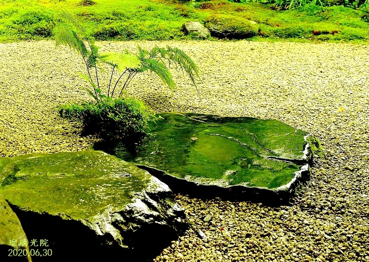 DSC_5589 - ★瑠璃の庭★ (750x532)