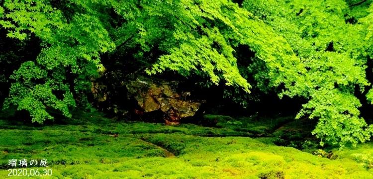 DSC_5591★瑠璃の庭★ (750x360)