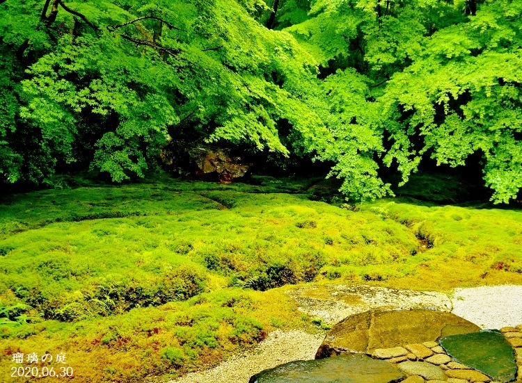 DSC_5591★瑠璃の庭★ - コピー (75そう0x551)